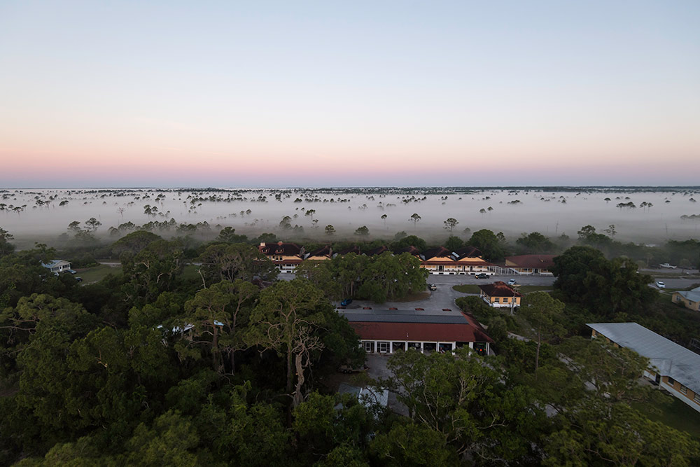 mist rolls in over the tops of trees and houses