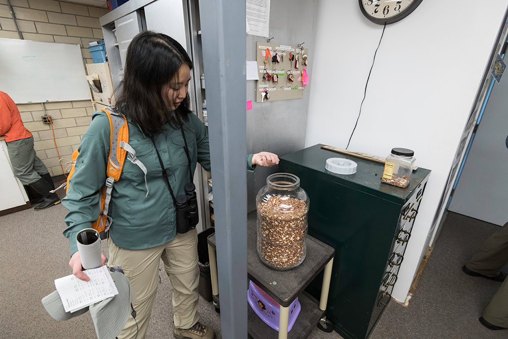 researcher takes bird seed from a large canister.