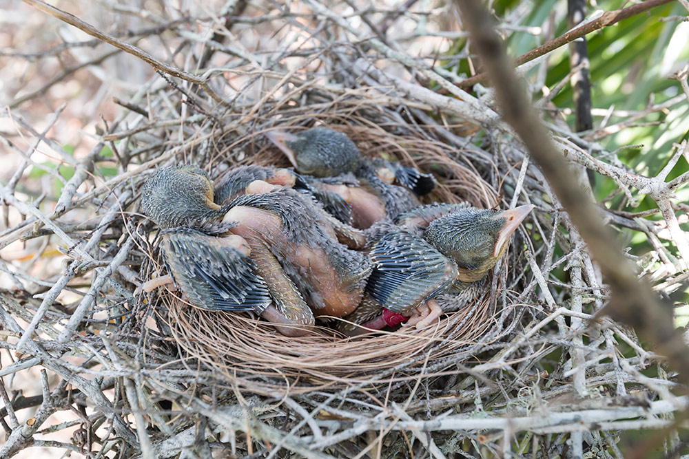 nest of baby birds.