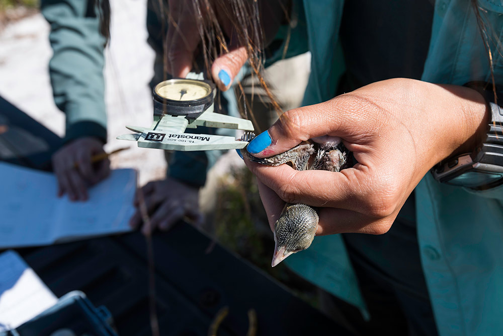 close up of a hand holding a bird while it gets tagged