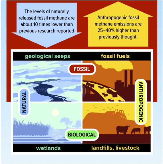 Methane emitted into the atmosphere can be sorted into two categories–fossil or biological–based on its signature of the isotope carbon-14. Biological methane can be released naturally from sources such as wetlands or via anthropogenic sources such as landfills, rice fields, and livestock. Fossil methane can be emitted via natural geologic seeps or as a result of humans extracting and using fossil fuels.