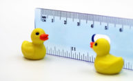 Rubber ducks and a ruler illustrating the social distancing concept of staying six feet apart.
