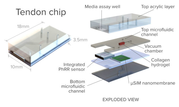 artist's illustration of a tendon chip, with an exploded view showing the layers for the top acrylic layer, the microfluidic channel, the vaccuum chamber, collogen hydrogel, integrated sensor, and bottom microfluidic gel.