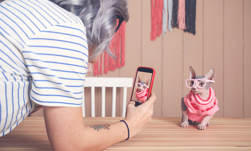 person takes a cellphone photo of a cat dressed up in a pink sweater and glasses
